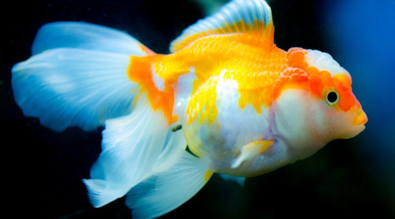 Fish for 100-gallon tank