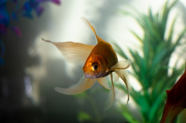 Things to put in a fish tank - 11 Essentials for Your Freshwater Fish Tank