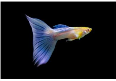 The Ultimate Guide to Guppy Grass Care – Guppy Fish